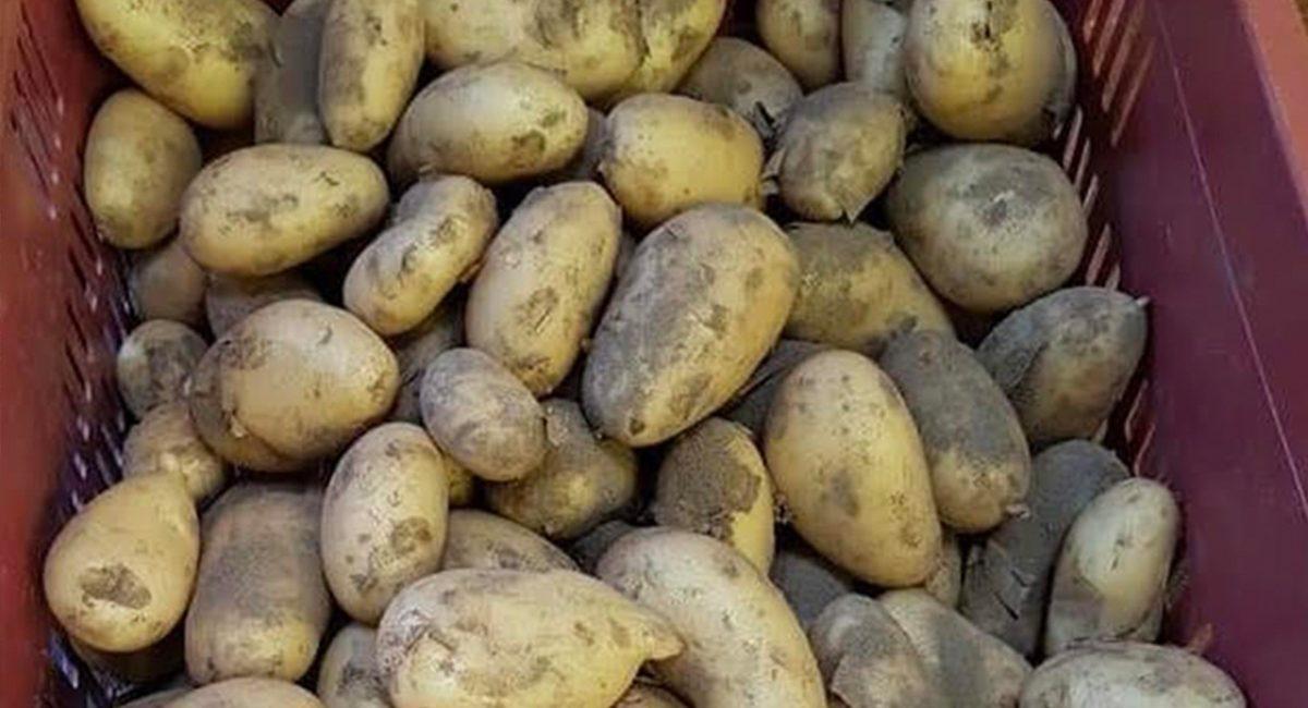 resTour_Ingredienti-giugno-patate